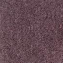 Spectra Purple